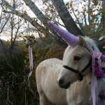 rodeo 2017 Dillon unicorn